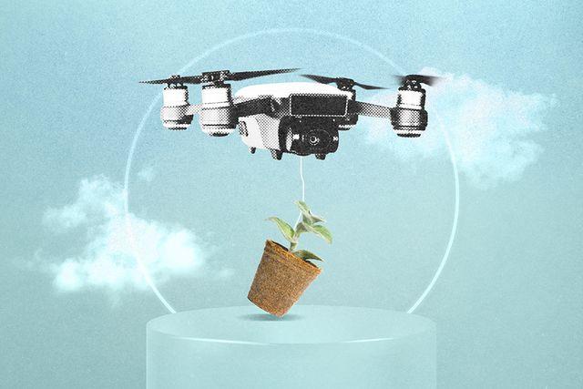 Drones para llenar de bosques España featured image