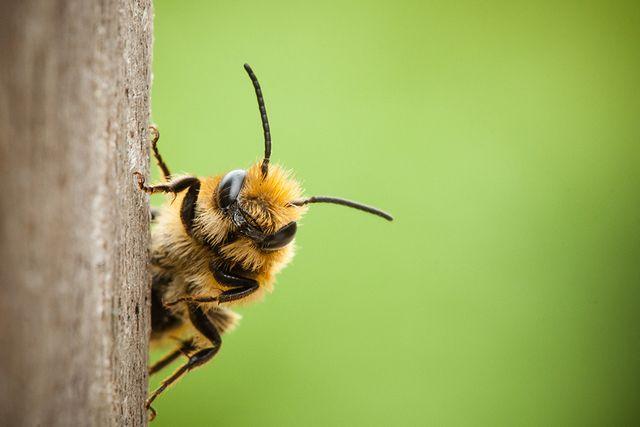 Las abejas, cuidadoras de nuestros ecosistemas: mucho más que proveedoras de miel featured image