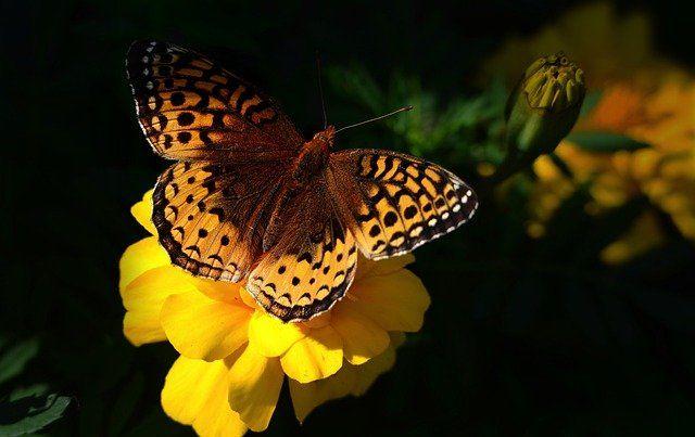 Forum UNESCO « Cohabiter la Terre » le 27 mai : comment agir en faveur de la biodiversité featured image