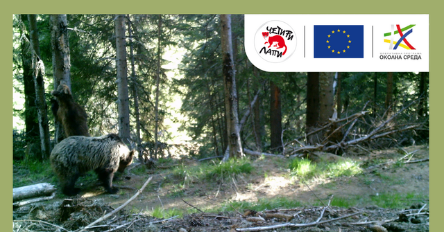 Scientists have photographed four bears in the Western Rhodopes, including a two-year-old bear featured image