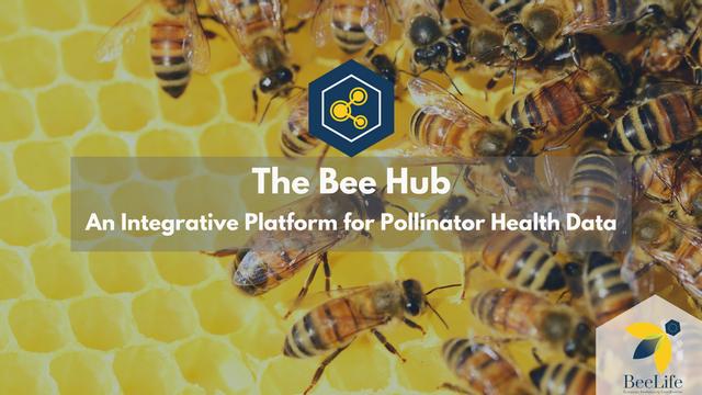 The Bee Hub - European Beekeeping Coordination featured image