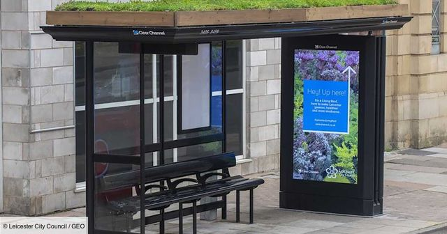 Au Royaume-Uni, cette ville végétalise les toits de ses arrêts de bus pour aider les abeilles featured image