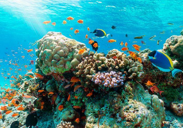 DWS lanza un fondo de renta variable centrado en la protección de los océanos featured image