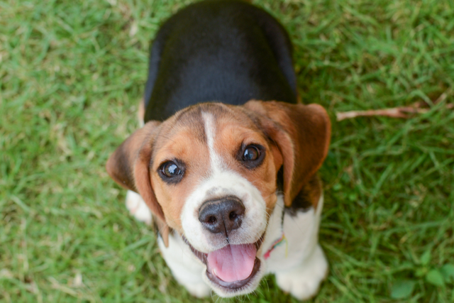 UK Government launches second Animal Welfare Bill to protect pets, livestock and wild animals featured image