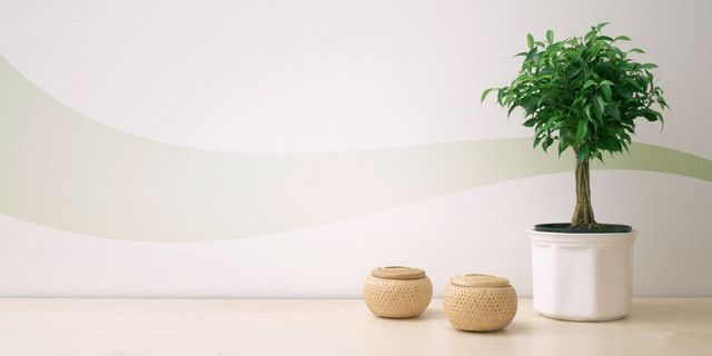 Purify your house with Indoor Plants featured image
