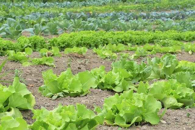 La agricultura ecológica a pequeña escala featured image