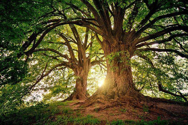 Una técnica 3D que distingue el estado de salud de árboles y de los arbustos con imágenes de satélite featured image