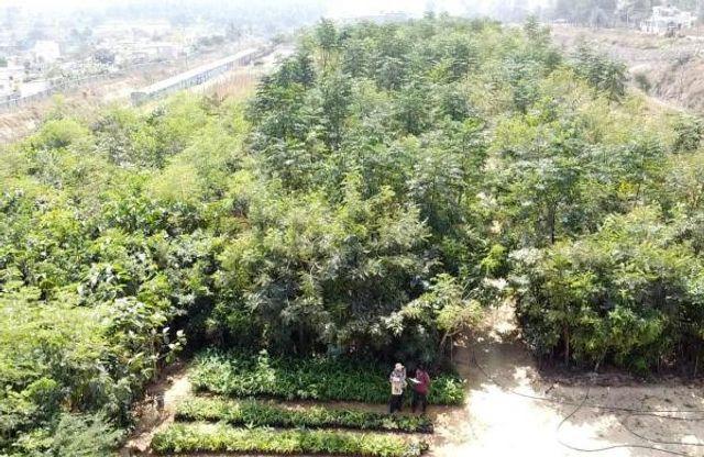 Bengaluru gets largest Miyawaki forest featured image