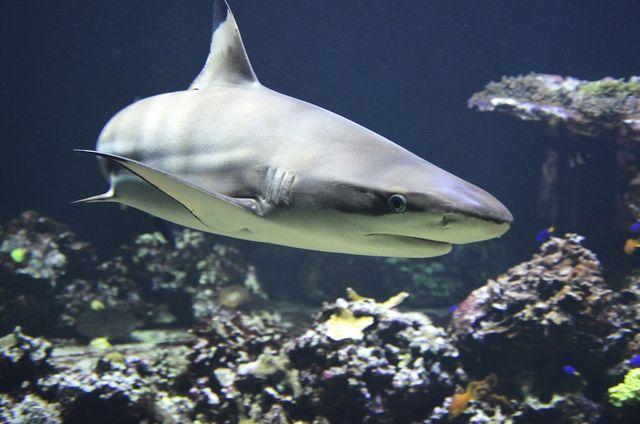 'Gli angeli degli squali': pescatori e WWF proteggono le specie minacciate featured image
