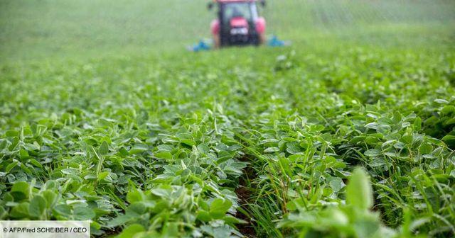 Le soja français veut s'implanter durablement featured image