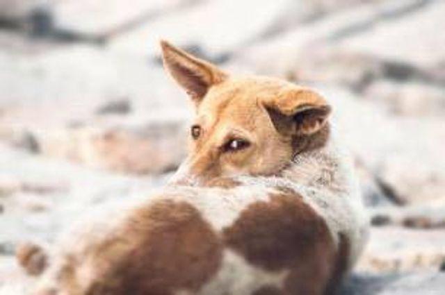 27 Julio - Día Mundial del Perro Callejero 2021 featured image