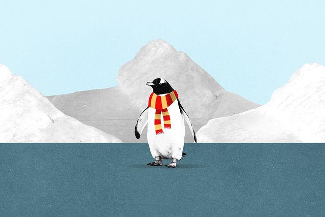 Las científicas españolas que luchan por la protección de la Antártida featured image
