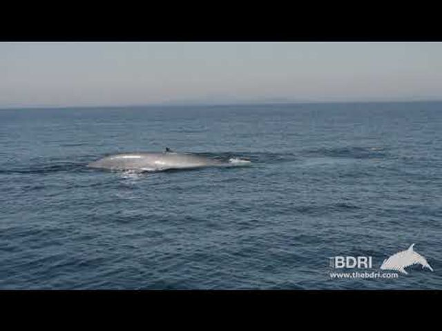 The coasts are alive with the sound of returning whales! featured image
