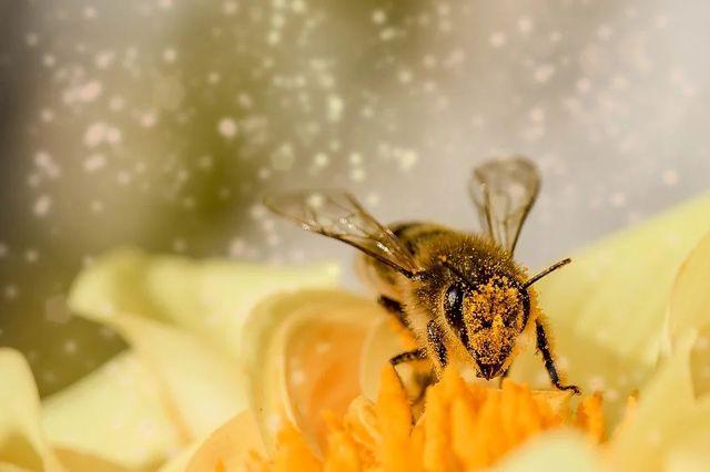La gran cualidad de las abejas con cerebros más grandes featured image