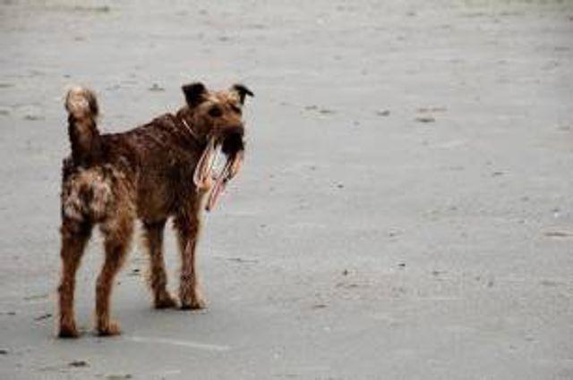 Día Mundial del Perro Adoptado 2021 featured image