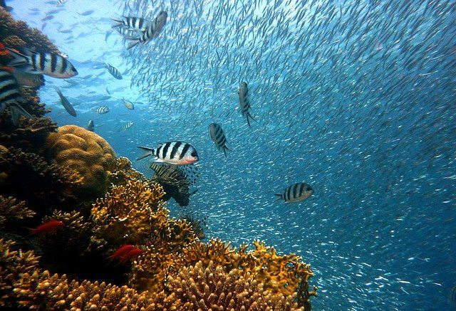 La biodiversidad marina de La Palma se enfrenta a la lava featured image