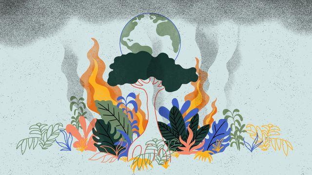 Changements climatiques : et si la forêt se retournait contre nous ? featured image