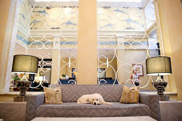 8 Adorable Dogs Who Work (or Just Hang Out) Full Time in Luxury Hotels featured image
