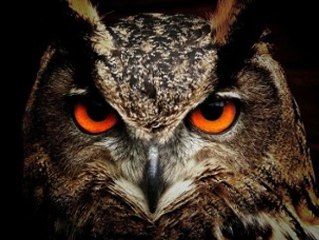 What kind of Salesperson are you - An Eagle or an Owl? featured image