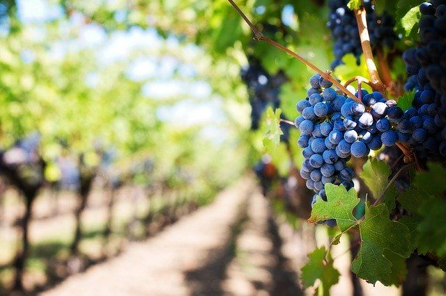 Winetech: how tech is disrupting one of the world's oldest industries featured image