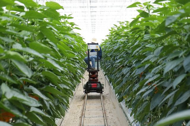 Is smart farming the future of food? featured image