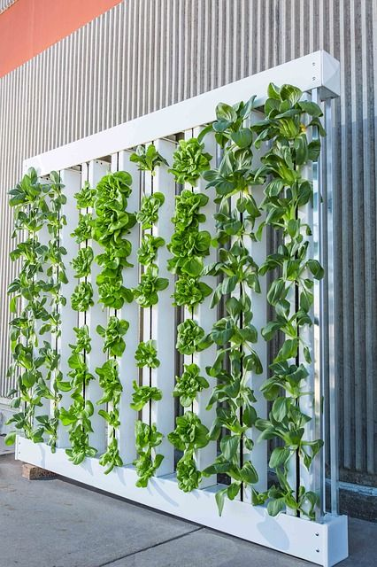 Hydroponic farming — creating a level playing field? featured image