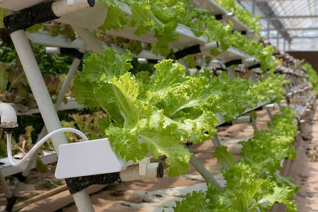 Earthworm investment in vertical-farming start up featured image