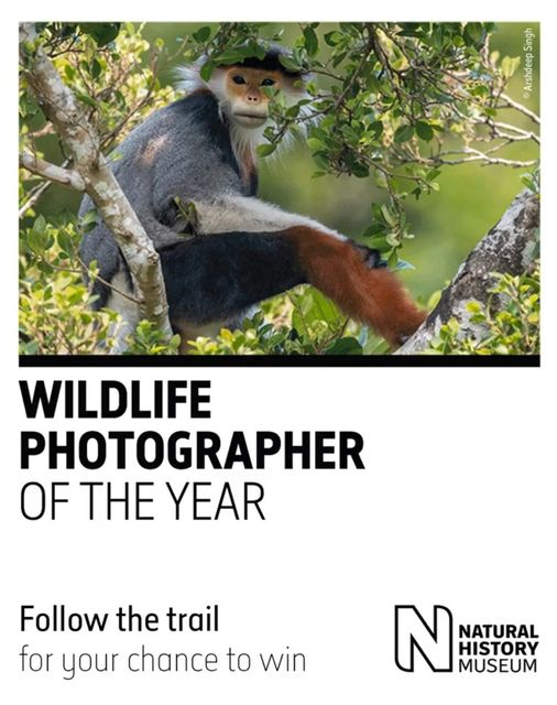 Explore the NHM Wildlife Photographer of the Year gallery: follow the trail and win prizes! featured image