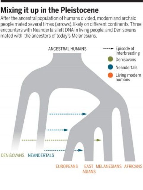 Are you part Neandertal? featured image