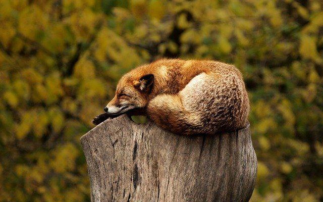Kritische Lücke beim Schlafmodus featured image
