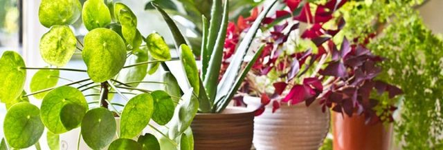 Seven benefits of having plants in your office featured image