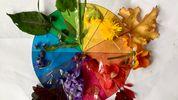 Nature walk idea #1: Match colours of nature to a colour wheel