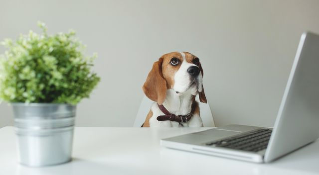 Do Office Pets Bring Benefits? featured image