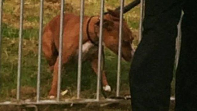 Dog attacks 11 children in playground featured image