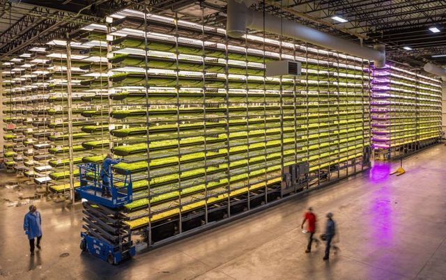 Growing food out of thin air? featured image