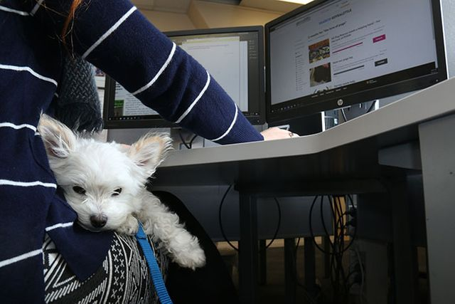 Pets reduce stress at work featured image