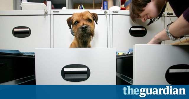 Paws for thought: why allowing dogs in the office is a good idea featured image