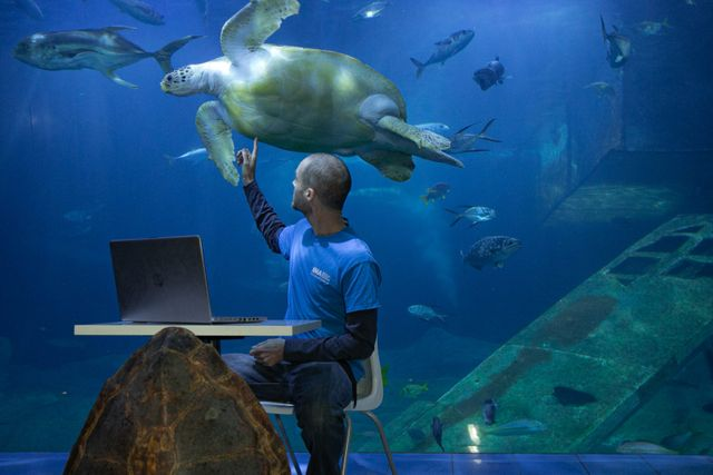 Lessons from the National Marine Aquarium - for free starting 15th Jan,  then every week for 7 weeks! featured image