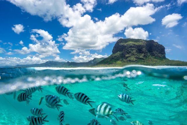 Mauritius: Tropical Paradise or Innovation Leader? featured image