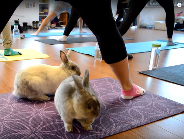 Bunny Yoga: Exercise classes with rabbits featured image