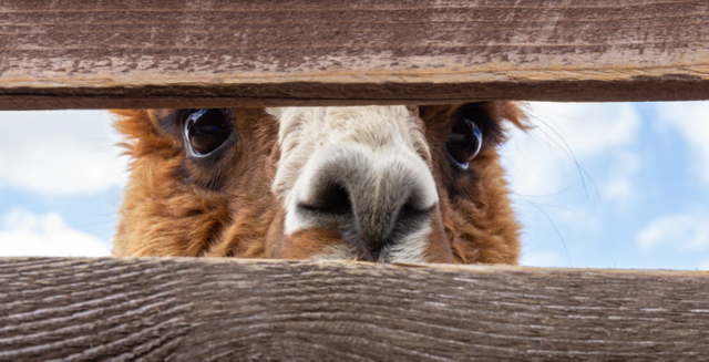 Alpaca raises $10m in Series A funding featured image