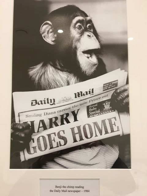 WARNING - Chimps read newsPAPERs! featured image