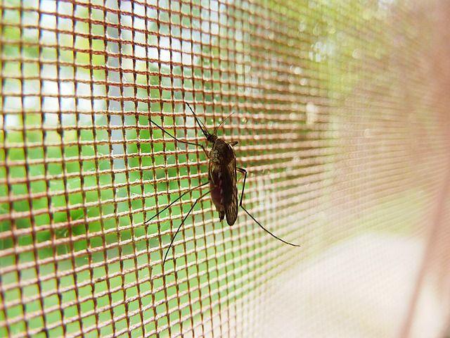 Imagine Zero Malaria featured image
