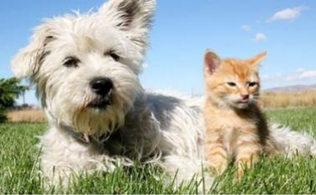 UK Pet Insurance Market tops £1bn featured image