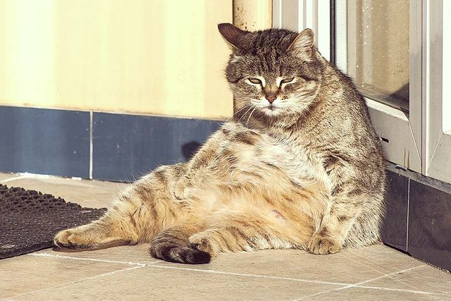 Fat cat bosses - unfair pay gap in the UK featured image
