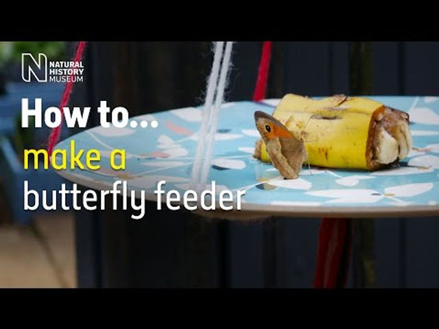 Make your own butterfly feeder and join the Big Butterfly Count in July featured image