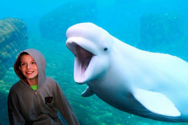 CT Uses P3 To Save Aquarium featured image