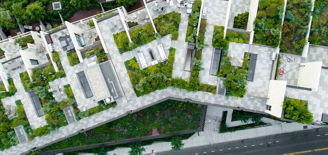 NYC's roofs are getting a sustainable makeover, but is green or solar better? featured image