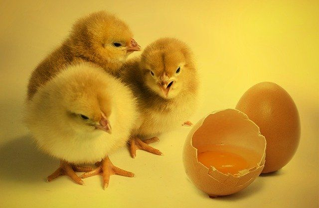 """The """"Chicken and Egg Problem"""" featured image"""