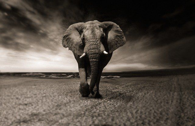 What do elephants and the legal sector have in common? featured image